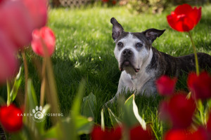 Baby was a special girl who was a faithful, gentle, and loyal companion for 14 years. She holds a special place in her owner's heart and will be missed by many. Run wild among the flowers, Baby.