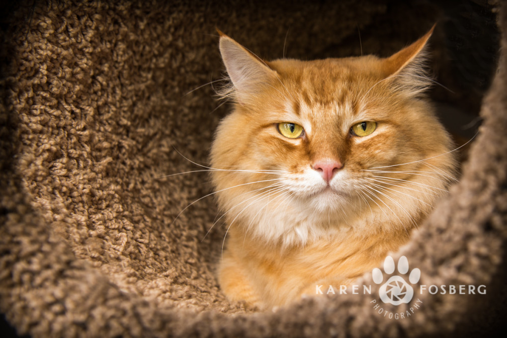 cats-feline-dogs-canine-photography-2013