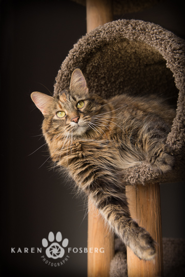 cats-feline-dogs-canine-photography-2013-3-2