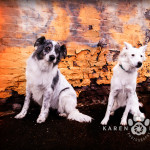 dogs-canine-photography-may2013-2-2