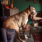dogs-canine-photography-may2013-41