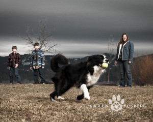 dogs-canine-photography-may2013-7
