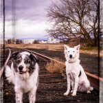 dogs-special-effects-pet-photography-7.5in-long-edge-6