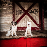 dogs-special-effects-pet-photography-7.5in-long-edge-7
