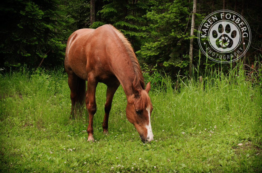 horse-pet-photography-logo-6