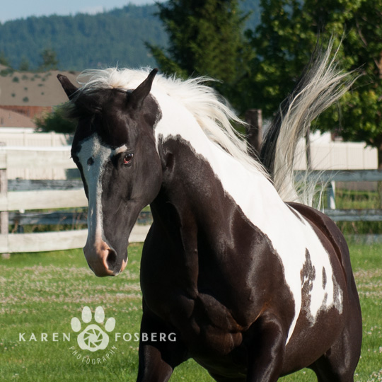 horses-pony-pet-photography-540p--long-edge